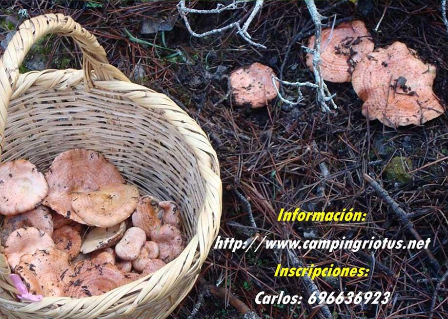 XXII Jornadas Micológicas Valle del Tus 2019, Yeste